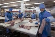 Инвентарь для пищевой промышленности